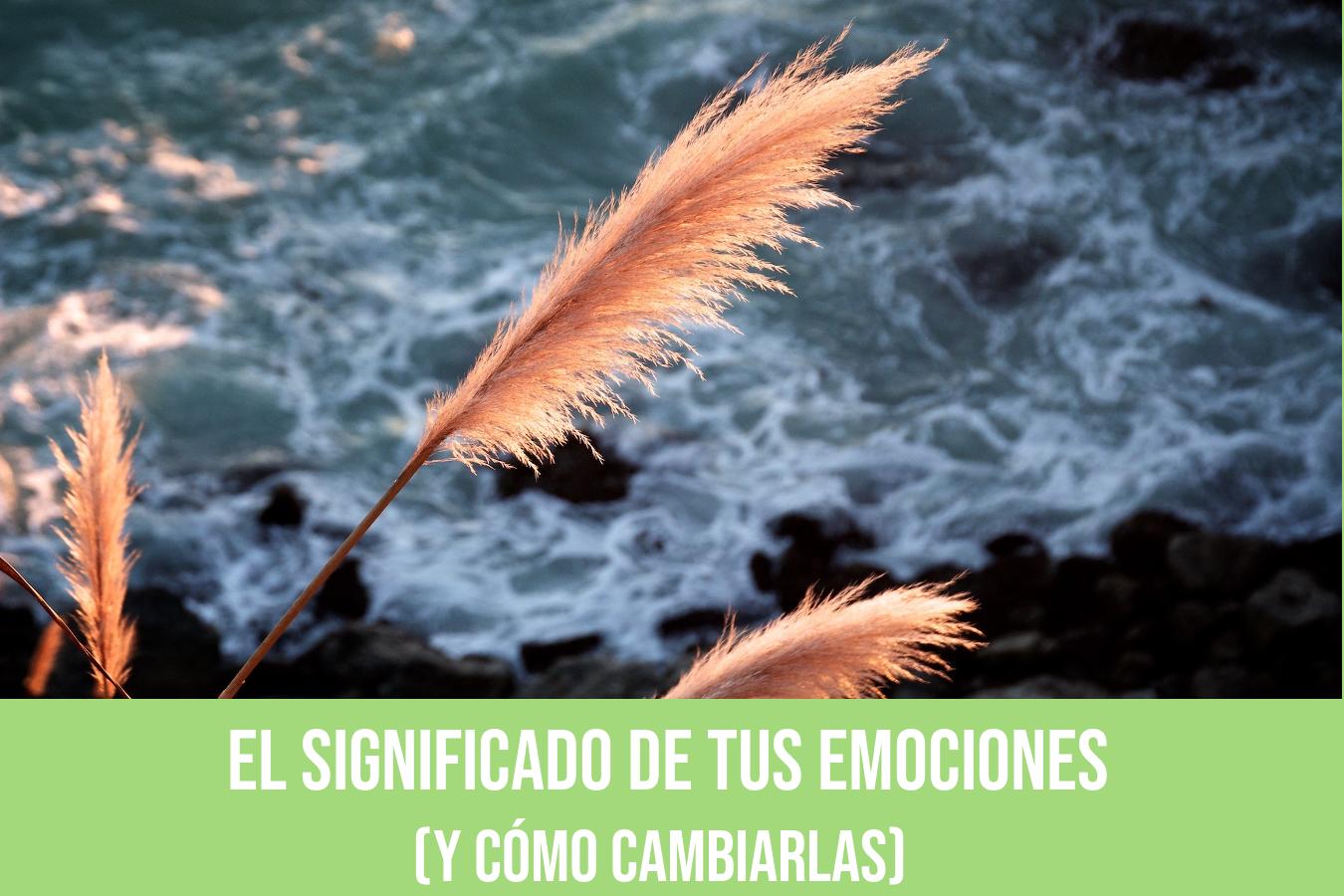 EL SIGNIFICADO DE LAS EMOCIONES (y cómo tenerlas a tu favor)